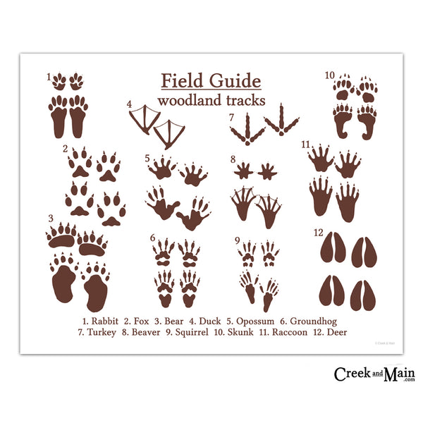 animal tracks, woodland art print, creekandmain.com