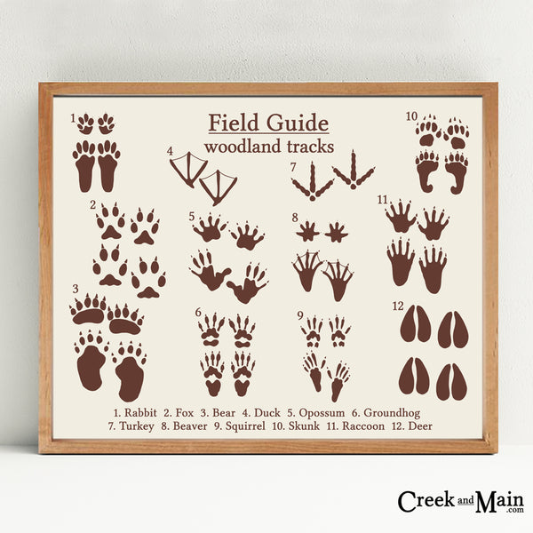 field guide animal tracks, woodland animals,