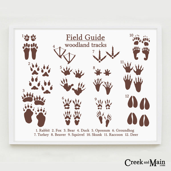 animal tracks, nursery decor, animal poster