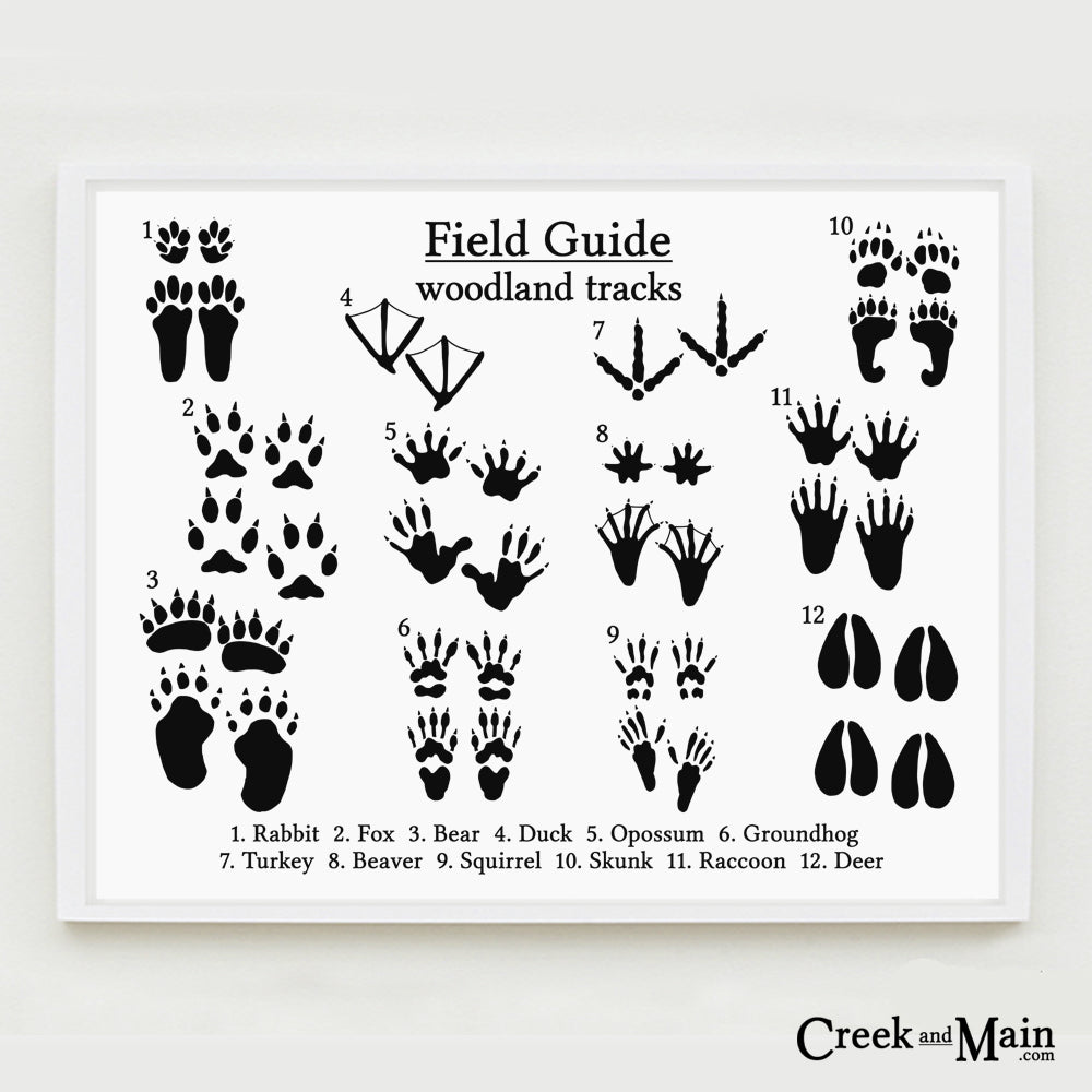 photo relating to Animal Tracks Printable identify Printable Animal Songs Poster - Landscape