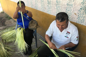 Taming and Harvesting Toquilla straw Montecristi hats