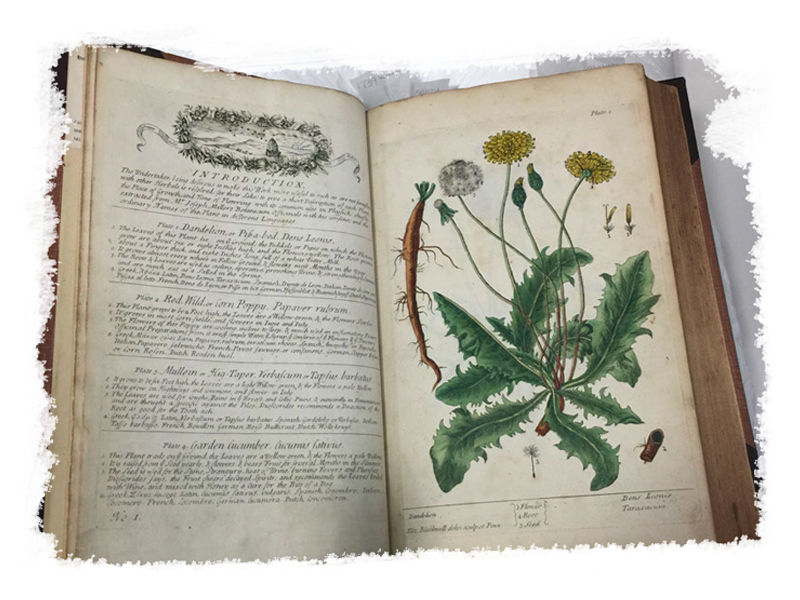 Old botany book
