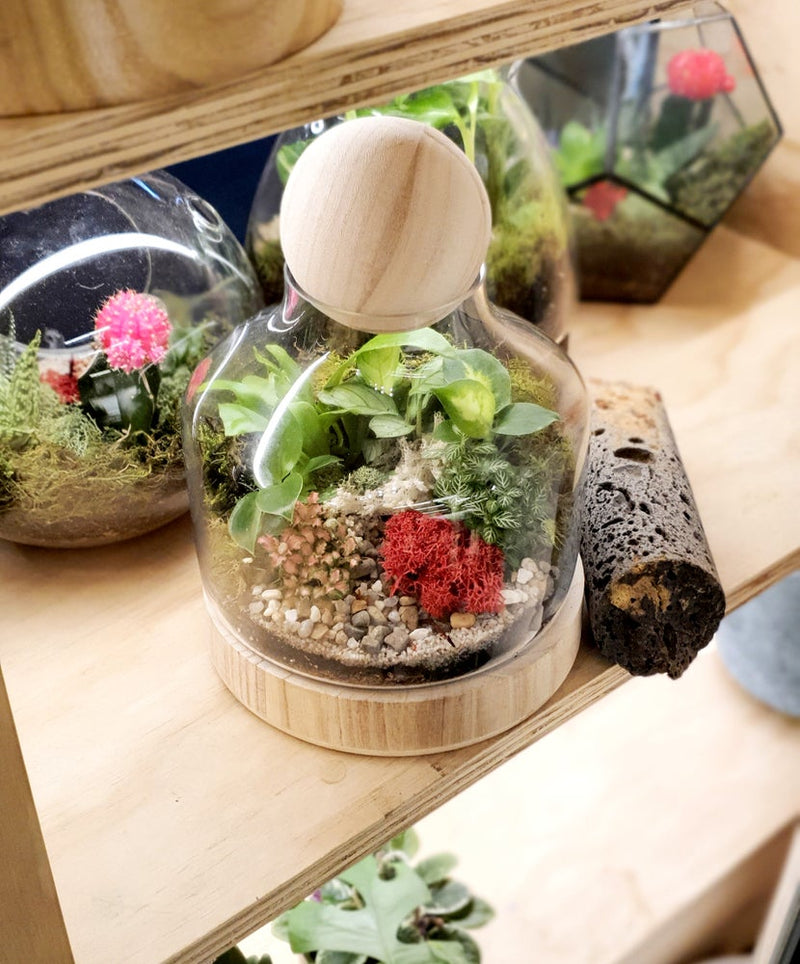 Mr Woody Mini Terrarium Enclosed Melbourne