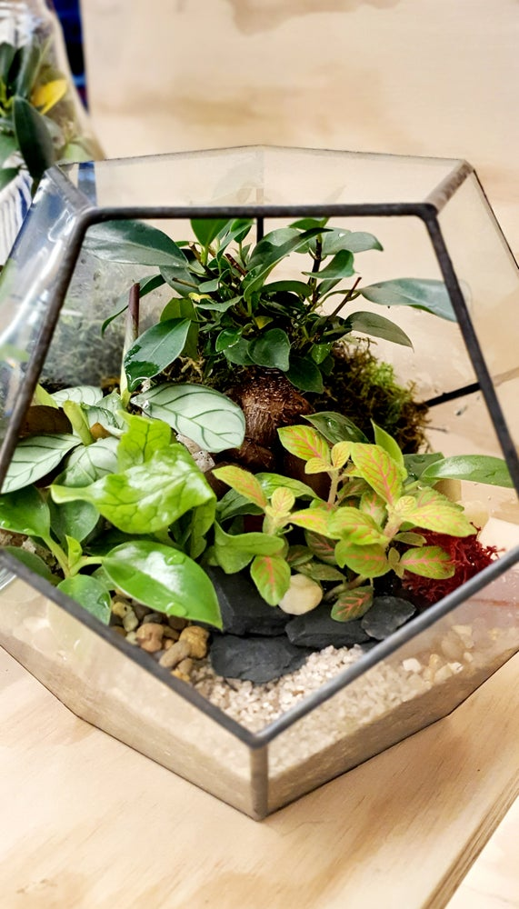 Geometric Terrariums Melbourne