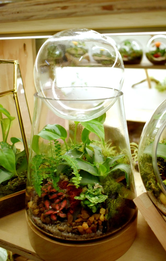 Enclosed Hurricane Terrarium Melbourne