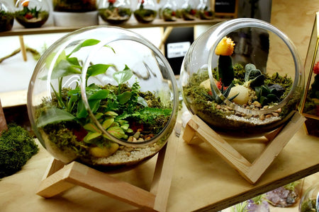 diy terrarium kit melbourne