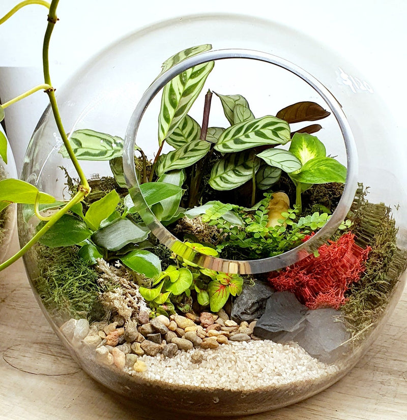 Fish Bowl Terrarium Melbourne without Bonsai Plant