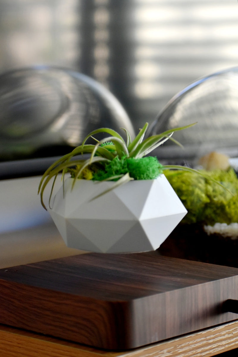 Pot Planter | Levitating