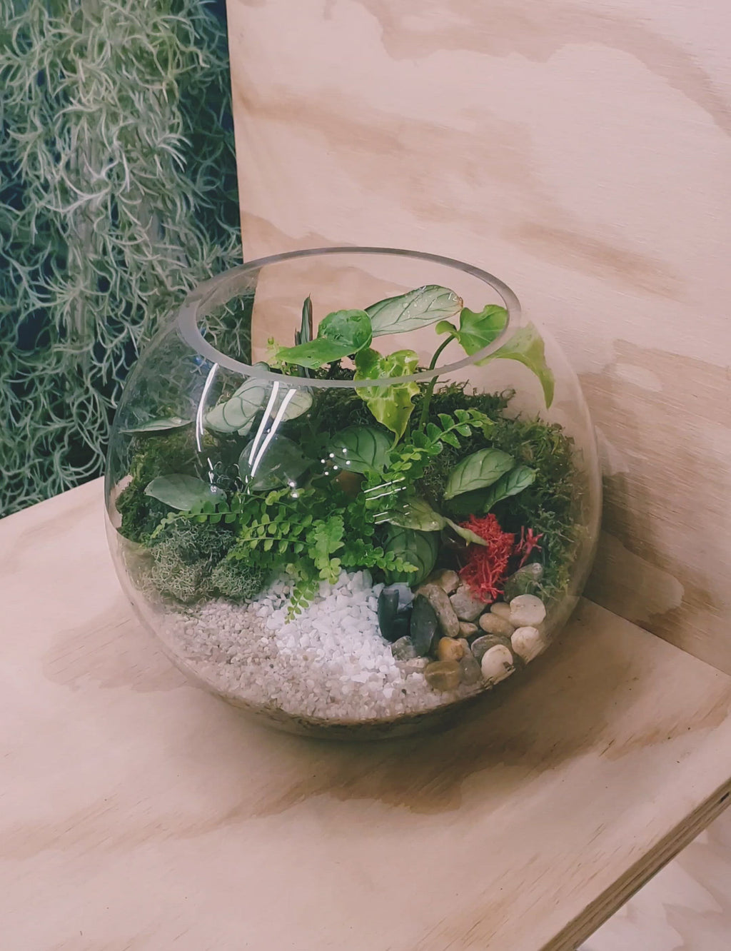 Tropical style small fish bowl terrarium