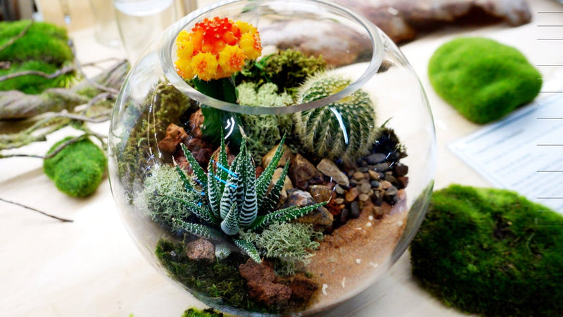 Succulent and Cacti small fish bowl terrarium Melbourne