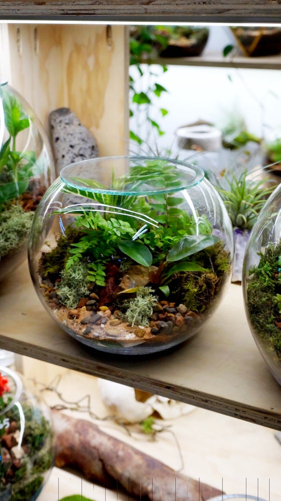 Enclosed fishbowl terrarium Melbourne