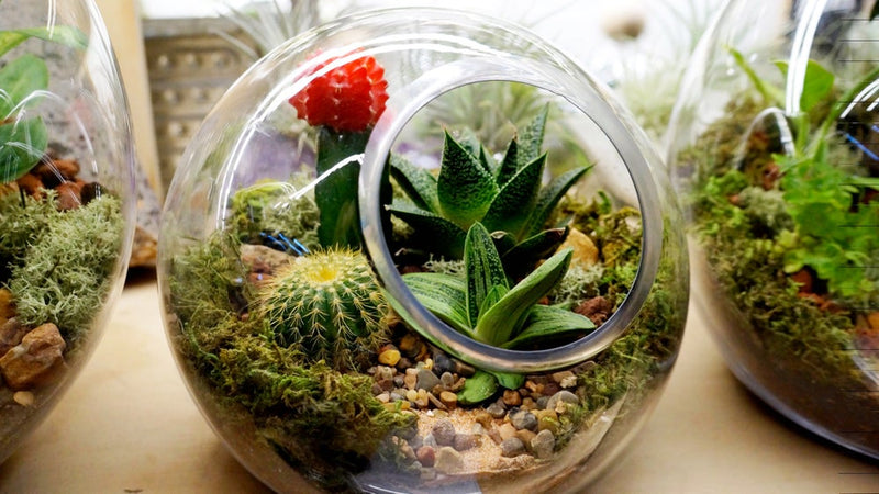 Fish Bowl Terrarium Melbourne