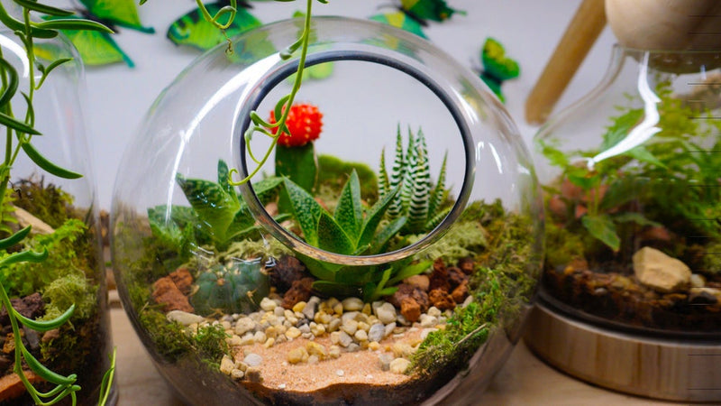 Open-Sided Fishbowl Terrariums (Ready-made or DIY)