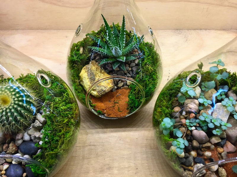 Teardrop Hanging Terrariums Small Melbourne