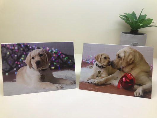 Holidays Season Cards - Guide Dogs