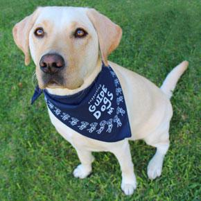Guide Dogs WA HangDog Art Limited Edition Doggy Bandana Yellow