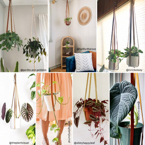 Plant Hanger | Adjustable Vegan Leather | Mahogany Brown