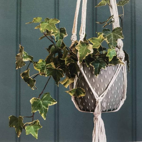 Glazed Hanging Pot
