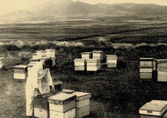 colony honeymeisters beekeeping jansen