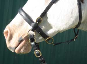 LightRider Bitless Noseband Leather - Black