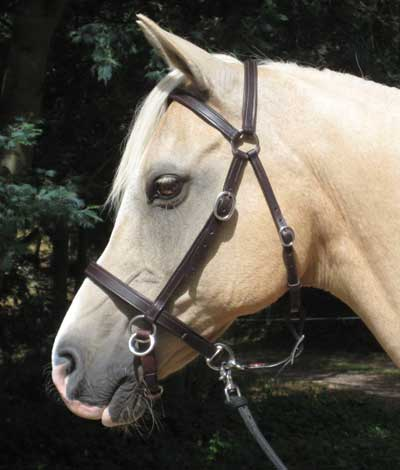 LightRider STOCKHORSE BITLESS Bridle - Regular Leather with S/Steel Fittings