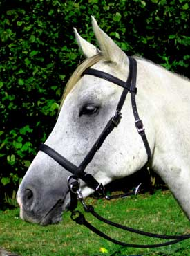 LightRider ENGLISH Bitless Bridle - Regular Leather with S/Steel Fittings