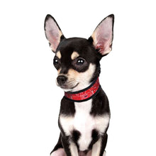 Lade das Bild in den Galerie-Viewer, up2dog-hundekuehlhalsband-western-aqua-coolkeeper-rot-chihuahua
