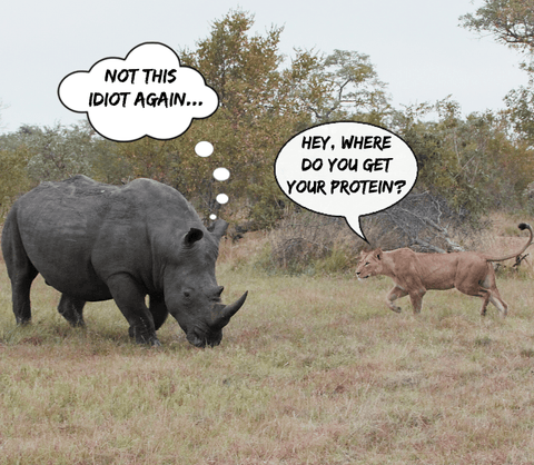where do you get your protein from? says the lion to the rhino vegan funny