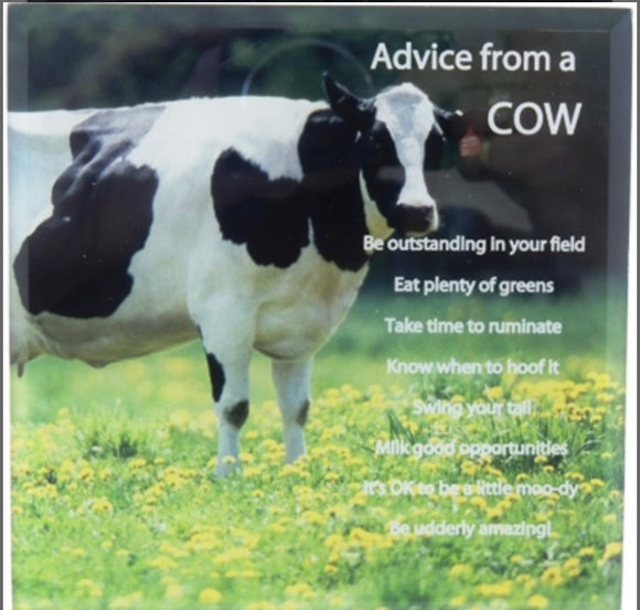 Posh Plaques & Signs – Advice from a Cow 15cm x 15cm