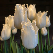 Load image into Gallery viewer, Tulips and Spring Flower Share