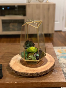 Geometric Glass Terrarium Planter & Succulent Planter- Tall