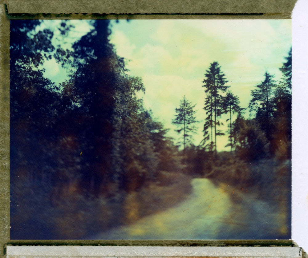 Polaroid of Idliss woods, Cornwall
