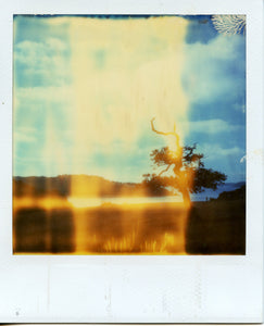 Polaroid of Trelissick, Cornwall