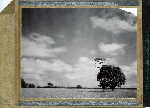 Polaroid of a tree in a cornfield in black and white
