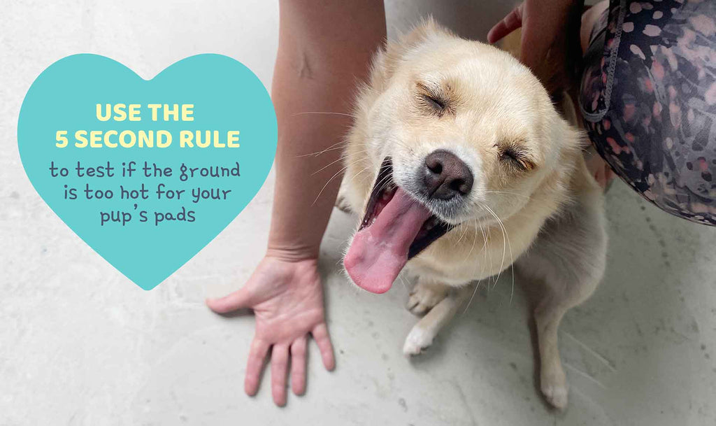 6 Summer Safety Tips for Your Dog | The Happy Jack Co