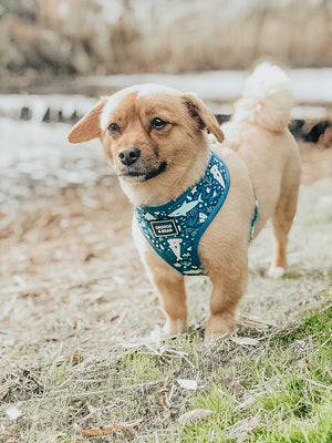 dog in blue shark harness, george and bear