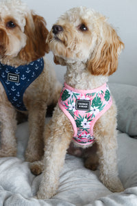 Living In Paradise Dog Harness