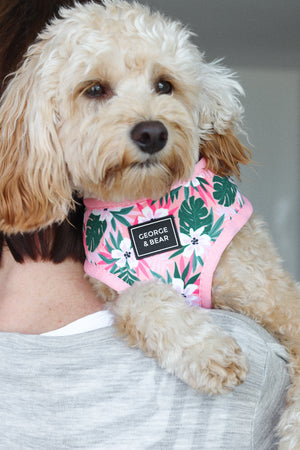 pink tropical dog harness - George and bear