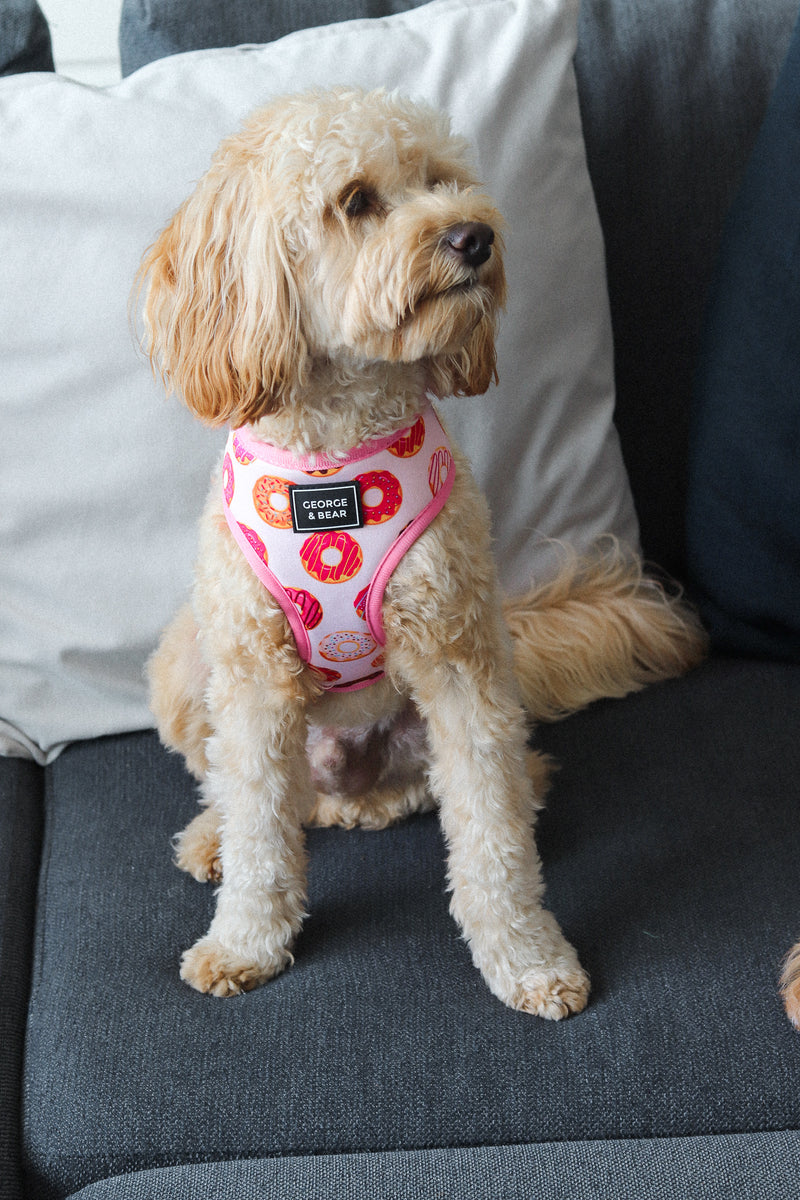 Feed Me Donuts Dog Harness