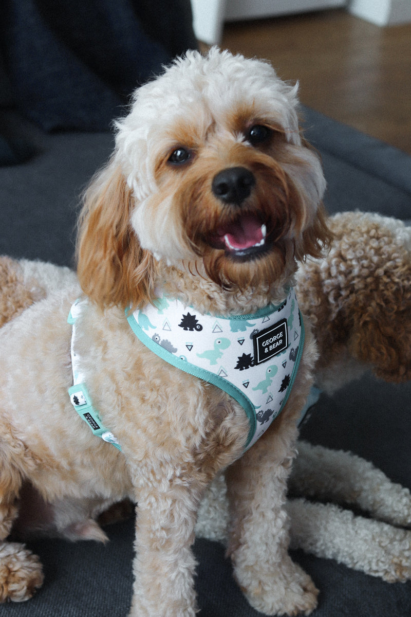 blue and green dinosaur dog harness - george and bear