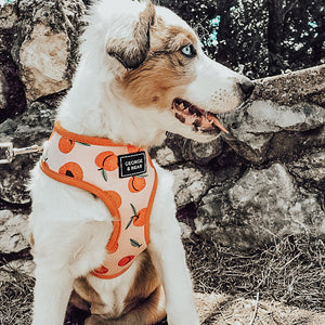 peach perfect dog harness - george and bear