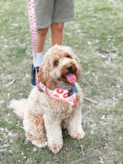 pink donut dog harness - george and bear