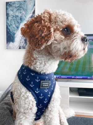 navy port melbourne dog harness - george and bear