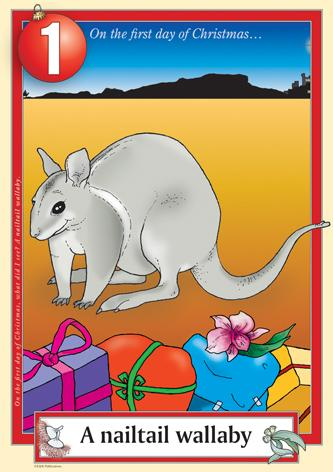 Australian Christmas endangered nailtail wallaby