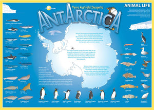 Map of Antarctica on blue background, with many labelled pictures of local wildlife