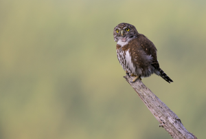 A beginner's guide to better bird photography