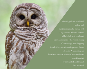 Strix Varia (Barred owl poem)