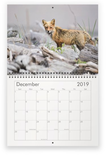 2019 Foxes of San Juan Island Calendar