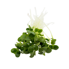 Load image into Gallery viewer, Organic Broccoli Microgreen Mix