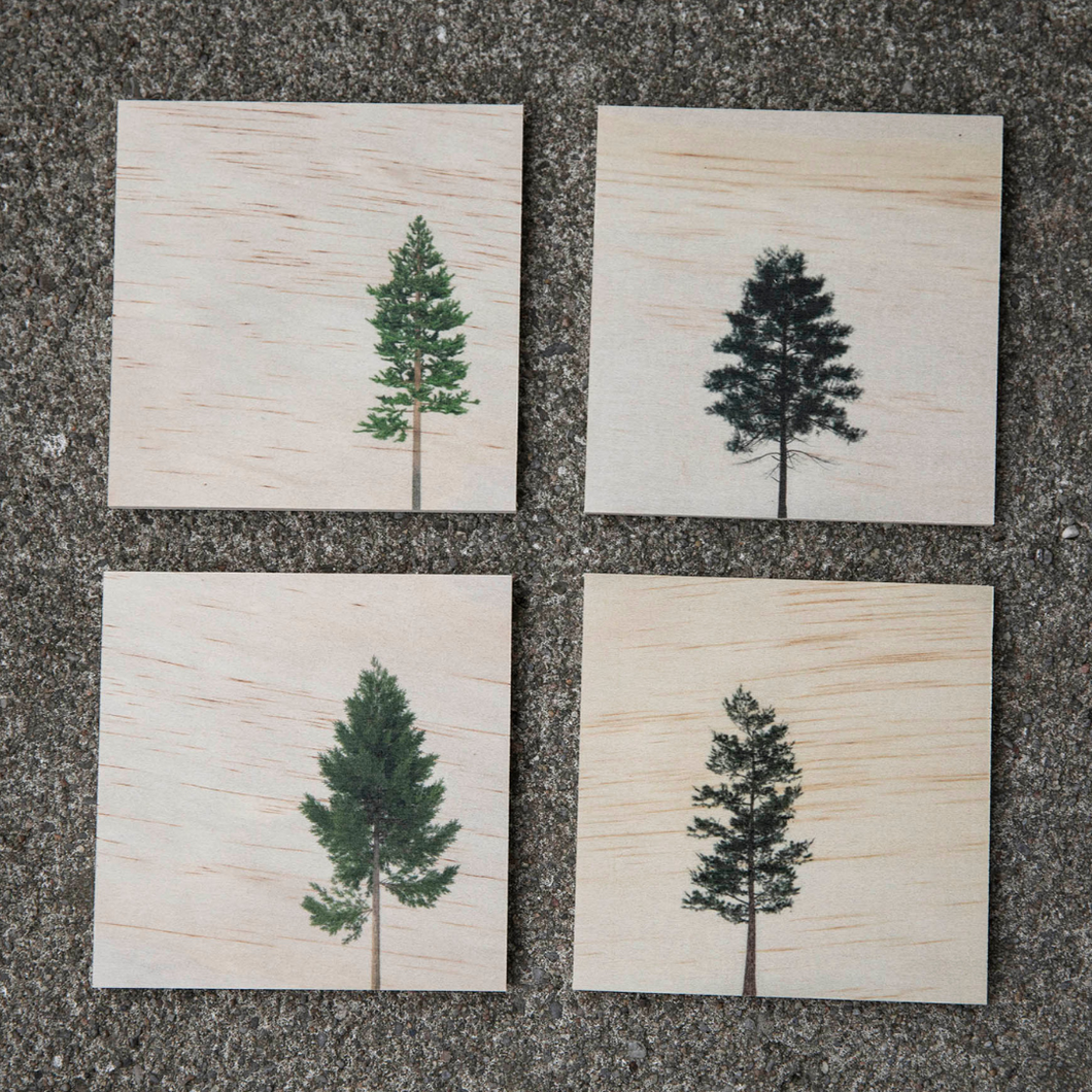 Conifer Wood Coaster Set